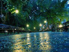 Blue green park scene!