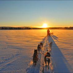 #suomi #Finland #dog #sled #winter #perfect #beautiful #morning #photooftheday #instagood #Scandinavia #cold #photographer #nature #landscape #snow #frozen #lake Winter Beauty, Beautiful Morning, Sled, Sunsets, Northern Lights, Wonderland, Frozen, Bullet Journal, Seasons