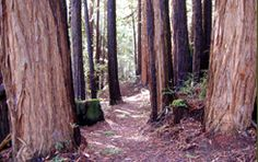 Spring is the beginning of hiking season for many Bay Area families, and whether you've…