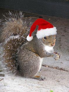 Merry Christmas, from Bonnen Squirrel Noel Christmas, Christmas Animals, All Things Christmas, Christmas Squirrel, Christmas Pets, Country Christmas, White Christmas, Animals And Pets, Baby Animals