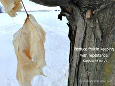 40 Words of Lent  2014: Day 1 Produce fruit in keeping with repentance... Matthew 3:8 #LentChallenge