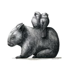 Renee Treml small print - tired wombat with two galahs Wombat, Animal Paintings, Animal Drawings, Drawing Animals, Gifts From Australia, Crested Pigeon, Australia Animals, Eye For Beauty, Botanical Drawings
