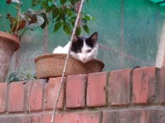 148 Cat-Plants You Probably Shouldn't Water My Flower, Flower Pots, Cat Plants, Rare Cats, Warm Bed, Owning A Cat, Yes I Did, Perfect Plants, Cat Sleeping