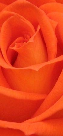 Colour love orange