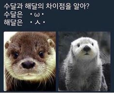 Cute Funny Animals, Funny Cute, Hilarious, Punny Puns, Wild Animals Pictures, Shiba Inu, Otters, Funny Moments, Memes