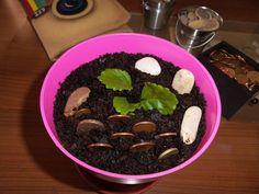 Mi planta del dinero | Cuidar de tus plantas es facilisimo.com