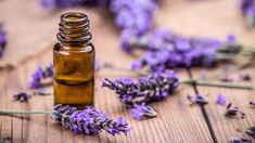Remedies For Sleep lavender-essential-oils-for-sleep - If you're struggling with getting a good night's sleep, then essential oils for sleep may be what you need as a natural treatment to aid in sleep Essential Oils For Fibromyalgia, Essential Oils For Hair, Essential Oil Blends, Huile Tea Tree, Tea Tree Oil, Lavender Flowers, Lavender Oil, Lavender Sleep, Lavender Plants