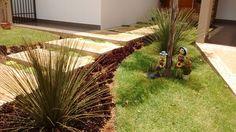 Dasylirion acrotrichum, hemigraphis, Garden.