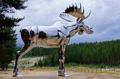 "Kewtie Bird on Instagram: ""The world's largest - and shiny too .  #worldsbiggestmoose #moose #shinymoose #storelgen #størsteelgen #storelvdal #bjøråarasteplass #shiny…"""