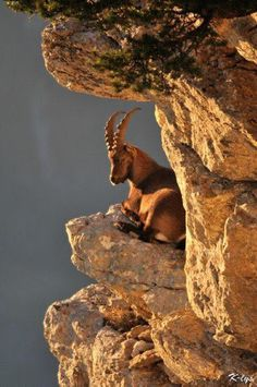 Animals from the New World- Mountain goat Nature Animals, Animals And Pets, Cute Animals, Wild Animals, Animal Fun, Beautiful Creatures, Animals Beautiful, Animals Amazing, Tier Fotos