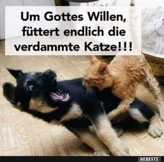 For God's sake, feed the damn Ka at last - Lustige Tiere Hund - Katzen Funny Animal Memes, Funny Animal Videos, Cat Memes, Funny Animals, Cute Animals, Animal Humor, Funny Cats And Dogs, Cute Cats, Cat Vs Dog