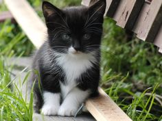 Raindrops on roses and whiskers on kittens ♫♫ looks just like my baby jackson!