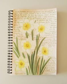 From the garden to my sketchbook