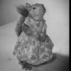 squirrel in a dress. i can die now