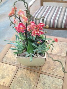 Another Orchid, and succulent Creation made by our flower shop designers!