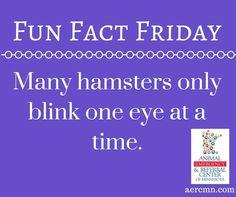 #FunFactFriday #animalfacts #funfacts #facts #animals #hamsters #hamsterfacts #AERC #saintpaulanimalhospital