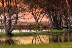 Dawn at the waterhole by Johanna Hedderwick on 500px