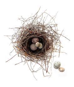 nest with stone eggs by Mary Jo Hoffman