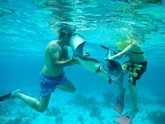 """""""Barbara"""" is the most social of the stingrays, and often joins our snorkel groups for fun"""