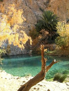 Crystal clear fresh water in the Chebika Oasis, western Tunisia, north Africa. (Photo by dschubba)