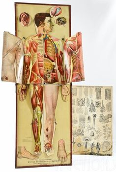 1889 White's Physiological Manikin, published by James T. White and Company, New York
