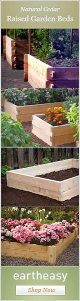 Raised Garden Beds - great info on depth of soil needed for different plants.