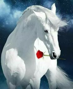 BEAUTIFUL WHITE STALLION WITH RED ROSE