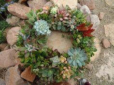 A living wreath can be a unique, long-lasting gift. Flowers, Bloom, Cactus Plants, Succulent Wreath, Succulent Planter, Flower Arrangements, Succulents, Plants, Succulent Art