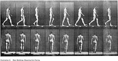 edward muybridge - human walk - side and back views