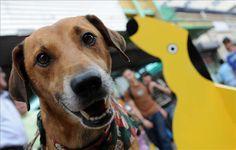 Reos de EE.UU. rehabilitan en una prisión perros maltratados