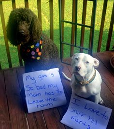 """Winston (the farting poodle) """"I cant help it i love eggs but they don't love me"""" Maya (the fart sniffer) """"His toots smell like roses"""" My gas is so bad my mom has to leave the room I love to sniff his farts"""