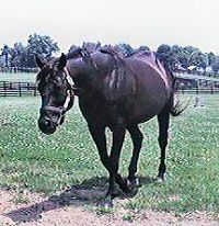 Seattle Slew 1996