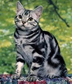 Types of Cat Markings - Bing images