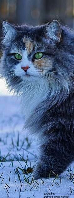 Now that's neat -> Beautiful Cute Cats Images #exceptional