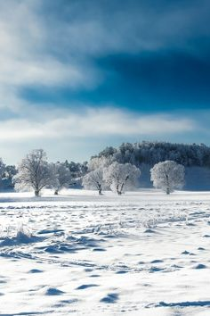 sweden cold...by Hector Melo A.on 500px
