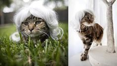 <b>Some say owners look like their cats. Here a 20 cats that are desperately trying to look like their owners.</b>