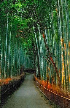 Sagano Bamboo Forest ,Kyoto Basin, Japan - want to visit Beautiful World, Beautiful Places, Amazing Places, Places To Travel, Places To See, Places Around The World, Around The Worlds, Nature Images, Science And Nature