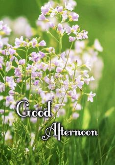I Miss Your Smile, Good Afternoon Quotes, Quotes For Whatsapp, You Are My Life, Trying To Sleep, Guys Be Like, Calendar, Life Planner