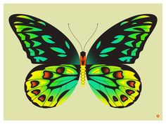 """birdwing butterfly. our butterfly and moth series is inspired by some of our favorite real life little beauties. each print in the series features a butterfly or moth, stylized and blown up to a gorgeously large size to show off the wonderful colors and details of each. this print is inspired by the birdwing butterfly of queensland, australia. birdwing butterfly is a limited edition handmade screen print on heavy, titanium white archival paper. Print measures 24"""" x 18"""" (61cm x 45.7cm)…"""