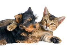 M ¿Cansado del exceso de ladridos y maullidos? Maneras para mantener la paz gato perro