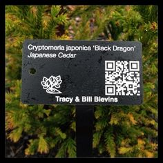 We are sending out free samples of our interactive plant identification tags. Plants Map tags connect to a webpage for one of your plants using a QR Code. Visitors to your garden can learn about your plants and you can use the code to keep your notes and add photos as your plant grows. Request a free sample tag!