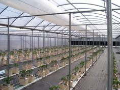 Image result for tomatoes hydroponics