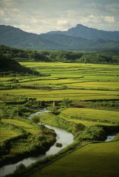 Rice fields in South Korea