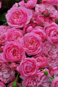 Exotic Flowers, Amazing Flowers, Beautiful Roses, Flower Images, Flower Photos, Flower Close Up, Good Morning Flowers, English Roses, Floral Bouquets