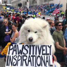 Pawty time down at the Finish Line!! #BostonMarathon