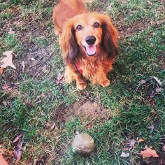 Doggy Diaries: Cody | Adorable DogVacay pooch Cody tells us about his day with his Host Yulia B. in Arlington, VA.