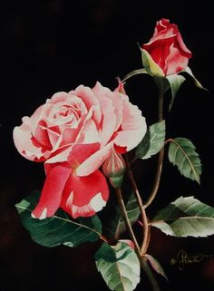 Coral Rose & Bud, painting by artist Jacqueline Gnott