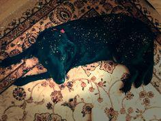 Christmas pup http://ift.tt/2fmIkPy