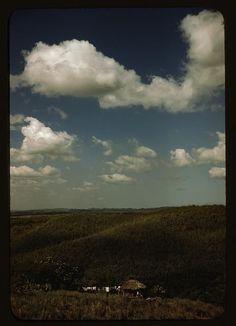 Sugar Cane Land Plantations Landscapes Agriculture Rio Piedras Puerto Rico 1941 | eBay