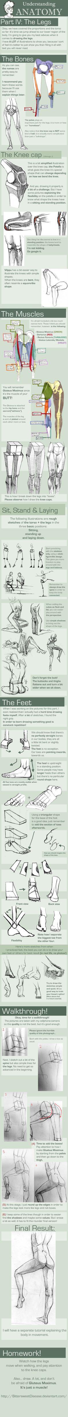 Understanding anatomy - legs #Anatomytutorial